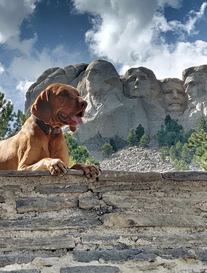 Finest Travel Spots That Your Pet Will Love